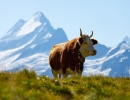 В Швейцарии развито сельское хозяйство. Самый известный экспортный товар — сыр эмменталь