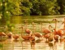 neckerisland-gallery-flamingos-large